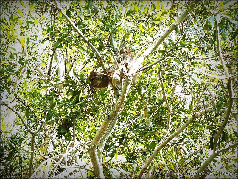 2016-11-02_PB020007_Botanical Gardens,Largo,Fl