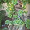 2016-11-02_PB020022_Botanical Gardens,Largo,Fl