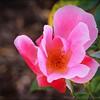 2016-11-02_PB020013_Botanical Gardens,Largo,Fl