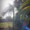 2017-03-01_P3010009_Palm Trimming,Clwtr,Fl