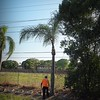 2017-03-01_P3010018_Palm Trimming,Clwtr,Fl