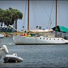 2017-04-24_P4240052_North Yacht Basin,St pete,Fl