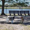 Freedom lake dog park   2021-02-04  rx10m4