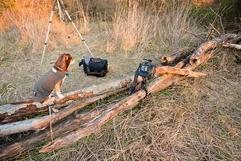 """Cheech Photo Assistant, Columbia MO<br /> <br /> This is the setup photo for my Green and Orange Moss photo here:  <a href=""""http://smu.gs/vqUEu6"""">http://smu.gs/vqUEu6</a><br /> <br /> Of course I needed the logs to stay very still so Cheech decided to hold them in place for me.  I went out looking for somewhere to use my new gorillapod and this is what I came up with.  Check in X3 to see the gorillapod up close.<br /> <br /> UPDATE:  Rick, that is a radio tranceiver in the hotshoe.  I use it as a wireless shutter release so I don't have to touch my camera to fire it.  I use a tripod, mirror lockup mode, and wireless shutter release for 98% of my landscape photos.  The tranceiver is a knockoff brand on Amazon, and I have about 10 of them that I use for wirelessly triggering flashes too.<br /> <br /> Daily photo: Dec 16, 2011, taken Dec 16, 2011"""