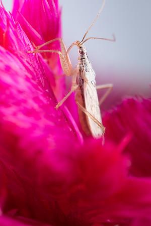 Goofy little bug on Pink Flower