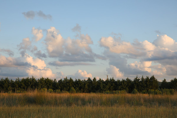 Grassy Field and Trees with clouds