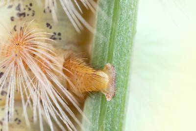 Detailed Photo of a Caterpillar's Feet