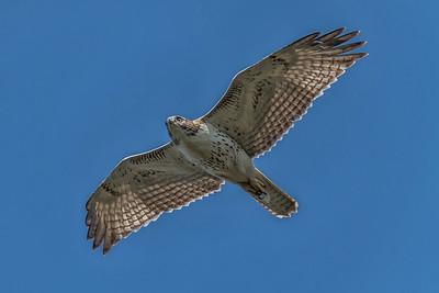 Hawk Flyby