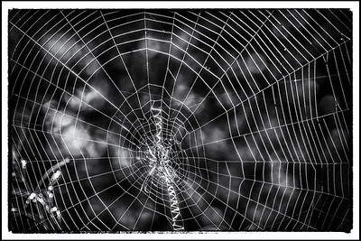 Spider Web in b/w