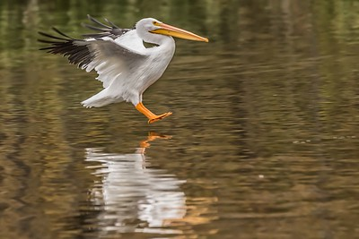 Pelican Landing at WRL