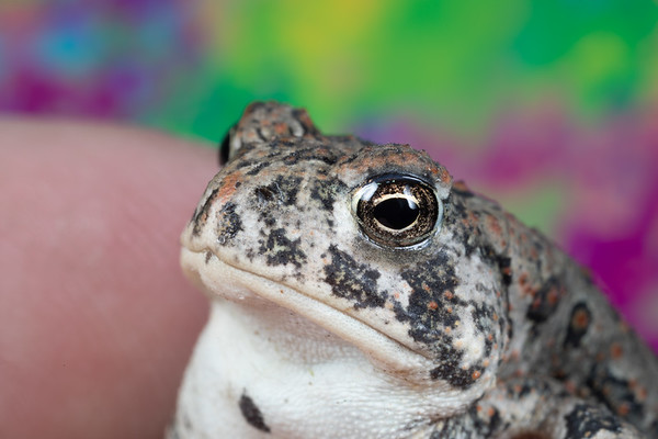 Close up of a cute baby toad