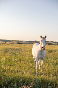 A White Horse by a Fence in a Grassy Field