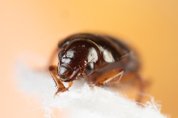 A Tiny Beetle on a Paper Towel