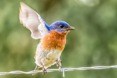 FLY AWAY - by Bill J Boyd
