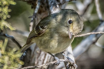 Bill J Boyd - HUTTON VIREO
