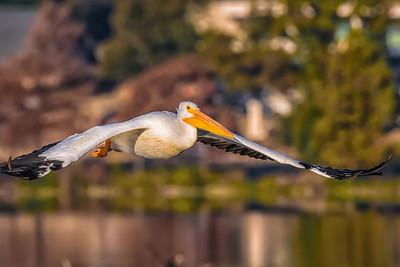 FLYBY....by Bill J Boyd