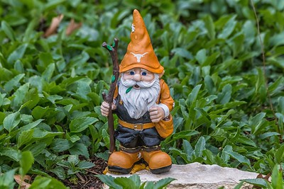 University of Texas Garden Gnome