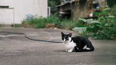 길가다 만난 길고양이 #수원 #길고양이 #길냥이 #고양이 #검정얼룩 #중성화표시 #녹색빛눈