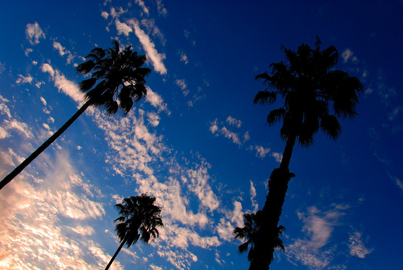 Palm Trees & Clouds