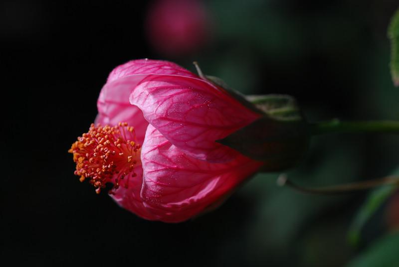 Bulbous Flower