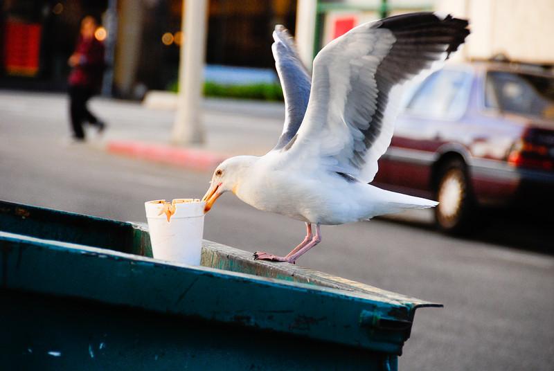Trash Seagull