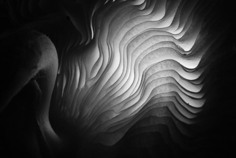 Backlit Mushroom