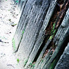 2/25/09<br /> I had big plans to ride my bike to the coast after work and get some great sunset shots, but I feel like I'm coming down with a cold, so I canceled the trip :(<br /> I got this shot in the botanical gardens as I sat and ate lunch. The deteriorating timbers that are used to construct planters and paths looked neat, so I snapped a quick shot. I played with the colors to make it darker, and increased the contrast significantly.