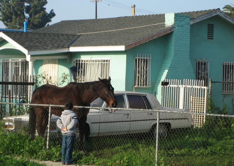Horse in LA Backyard