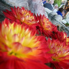 10/19/08<br /> Pretty flowers in a fountain. This was at a wedding I attended today at Tucson's Z Mansion. I like the comp of this photo - it has an obvious main subject, but also shows some people mingling in the background. I had intended to get the foremost flower in focus, but my compact was having issues. I think it still works, though.<br /> Congratulations Jason and Alexis!