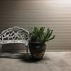 Bench & Plant