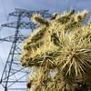 Cactus Power