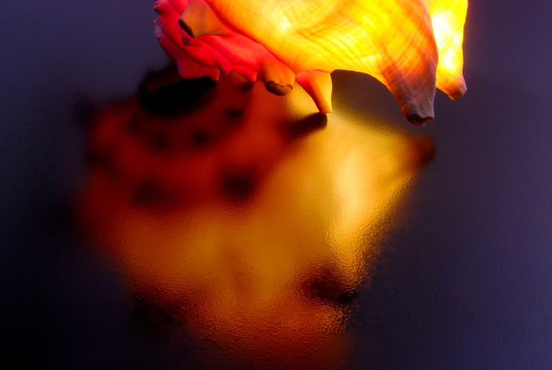 Conch Reflections