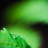 Dawn Droplet