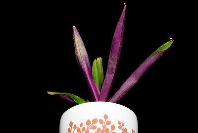 Potted Purple Plant