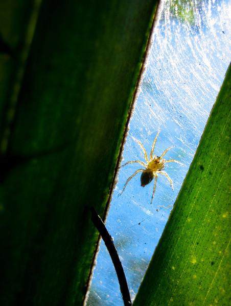 Spider From Below