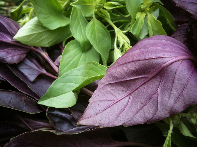 """<span id=""""date"""">_06/05/10_</span> <span id=""""title"""">Basil Duo</span> Some purple and green basil mixing it up at the farmer's market.  <a href=""""http://www.jawsnap.net/Daily/year2/7157835_BfJPF#588255815_gP2UA"""">[last year]</a> <em>one of the most scenic places I've ever been...</em>"""