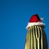 "<span id=""date"">_12/24/10_</span> <span id=""title"">Saguaro Santa</span> Festive, no? Stuff like this makes me feel at home in Tucson. This saguaro and many like it can be found at Tucson Medical Center, where my wife and I have spent the majority of our time the last three days. My mother-in-law had knee replacement surgery, and we finally got to take her home today! She's been doing great and we're all excited to see her recover and walk without pain.  To those that celebrate and read this tomorrow - Merry Christmas!  By the way, thanks for the comments on <a href=""http://www.jawsnap.net/Daily/year3/11272102_ACXDJ#1135721408_muQrq"">yesterday's photo</a>. I'd love to share the link so you can vote on it, but it's not working. Maybe the computers took an early holiday. <strong>UPDATE:</strong> It's working! Click <a href=""http://products.wolframalpha.com/holidayspikey/gallery/view.jsp?id=504"">here</a> to vote!  <a href=""http://www.jawsnap.net/Daily/year2/7157835_BfJPF#749113464_xb6oq"">[last year]</a> <em>my dear sister...</em>"