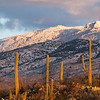 "<span id=""date"">_12/30/10_</span> <span id=""title"">Desert Snow</span> One heck of a winter storm blew through Tucson last night and this morning and dumped lots of snow on the mountains. These are the Rincons, with Spud Rock being the prominent point on the upper right. I hiked the Pink Hill trail in Saguaro National Park East, starting at the end of Broadway Boulevard. I like this shot because of the sunset colors and how well the saguaros stand out against the mountain. The storm had cleared by the early afternoon, which means it's gonna be crazy cold tonight. It was about 40 degrees when I took this shot and it's about freezing as I type this. It's supposed to get into the low 20s by the time the sun comes up again. Crazy.  <a href=""http://www.jawsnap.net/Daily/year2/7157835_BfJPF#753558507_K229T"">[last year]</a> <em>rest in peace, John...</em>"