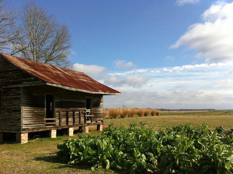 """<span id=""""date"""">__02/10/11__</span> <span id=""""title"""">Slave Cabin</span> <em>New Orleans, Day 2</em> This afternoon my wife and I took a plantation tour. Back in the day there were hundreds of sugarcane plantations lining the Mississippi river North of New Orleans. We took guided tours of Laura and Oak Alley. Laura had quite an interesting history, but Oak Alley was much more impressive. Stay tuned for more photos of that. Also stay tuned for photos I took this morning walking around downtown, including an abandoned power plant. This shot is a slave cabin with a garden at the Laura plantation. Despite the terrible injustices and inequalities of the time, it was really interesting to learn how the plantations were run. It was also really neat to drive through the cypress swamp and over part of Lake Ponchartrain.  See a better, higher-res photo of this scene in my <a href=""""http://www.jawsnap.net/Travel/NewOrleans2011/15869305_3pC5e#1193892745_w54av"""">New Orleans gallery</a>.  <a href=""""http://www.jawsnap.net/Daily/year2/7157835_BfJPF#785849332_3Mz72"""">[last year]</a>"""