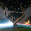 "<span id=""date"">_09/20/10_</span> <span id=""title"">Coral Tree Traffic</span> This is San Vicente Boulevard in Santa Monica - a beautiful wide road and median lined with cool-looking coral trees. I came here to take photographic advantage of the thick fog that rolled in tonight. Traffic was light, so I used a 30 second exposure to capture as many cars as I could. I used my Gorillapod on a drinking fountain to hold the camera steady.  In other news, I posted photos from the <a href=""http://www.jawsnap.net/Animals/Aquarium-of-the-Pacific/"">Aquarium of the Pacific's Photographers Night</a> that I attended on <a href=""http://www.jawsnap.net/Daily/year3/11272102_ACXDJ#1005785536_bhSsx"">9/12/10</a>.  <a href=""http://www.jawsnap.net/Daily/year2/7157835_BfJPF#656042406_WnGFQ"">[last year]</a>"