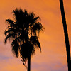 """<span id=""""date"""">_09/30/10_</span> <span id=""""title"""">Palm Silhouette</span> Not the most creative shot here - just a palm tree against some sunset-lit clouds. I failed to take more then a few test shots with the Sigma 150-500mm today, but I'll try again tomorrow. I rented a monopod which I think will really be necessary to make it through a whole day of shooting the San Diego Zoo.  <a href=""""http://www.jawsnap.net/Daily/year2/7157835_BfJPF#666466295_6qgkV"""">[last year]</a>"""