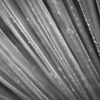 """<span id=""""date"""">_10/20/10_</span> <span id=""""title"""">Wet Agave</span> Today's wet photo is of some agave in the UCLA botanical gardens. I had my macro lens, but this was as close as I could get without getting stabbed by the plant next to it. The clouds cleared up this evening, so hopefully that's the last of the rain for a while. Thanks for all the comments on <a href=""""http://www.jawsnap.net/Daily/year3/11272102_ACXDJ#1055496213_iHf3T"""">yesterday's shot</a>! Did you notice it was taken with an iPhone?  <a href=""""http://www.jawsnap.net/Daily/year2/7157835_BfJPF#687518462_f3Roa"""">[last year]</a>"""