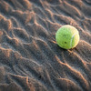 "<span id=""date"">_03/25/11_</span> <span id=""title"">Beach Trash</span> I braved the cold wind and went to the beach this afternoon around sunset to take some photos. I really was not expecting this tennis ball to be the most compelling shot I took, but those ripples are just crazy cool looking. I actually looked around for an object more interesting or natural than a tennis ball - heck, a rock would have been nice - but this was all I saw.  Other highlights included a golf ball, cool sand formations from the last storm and a dead seagull. It was... not the most exciting trip to the beach.   <a href=""http://www.jawsnap.net/Daily/year3/11272102_ACXDJ#819726136_38UTu"">[last year]</a>"