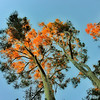Trees on Fire