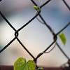 Fence Heart