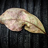 Loading Dock Leaf