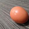 Fast Egg