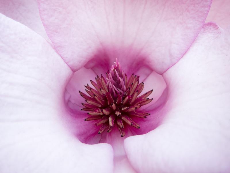 Magnolia Interior