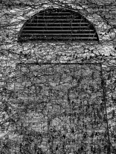 Dormant Wall