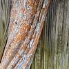 Fence & Tree